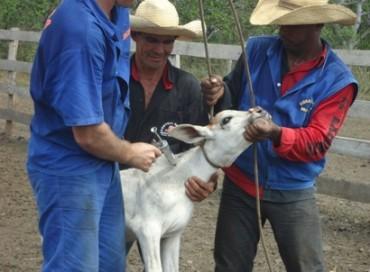 Vacinação Bolívia 2