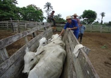 Vacinação Bolívia 3