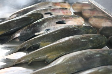 Tambaqui de Rondônia vendido no mercado de peixes de Manaus.