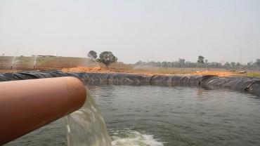 A água os resíduos da ração dos peixes são reutilizados para irrigar a pastagem do rebanho leiteiro