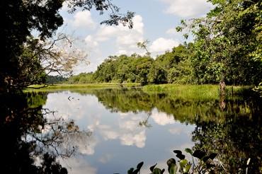 Matas, rio e animais protegidos garantem a sustentabilidade da vida em Rondônia