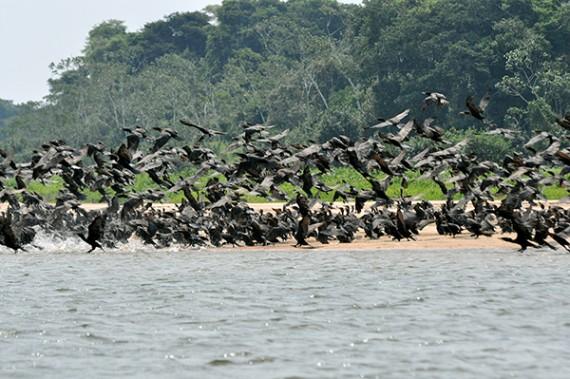 Vale do Guaporé, biodiversidade preservada