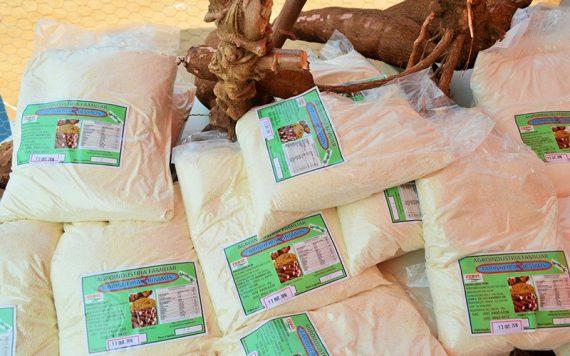 A projeção futura é dobrar a produção de farinha, que hoje é de 250 quilos por semana