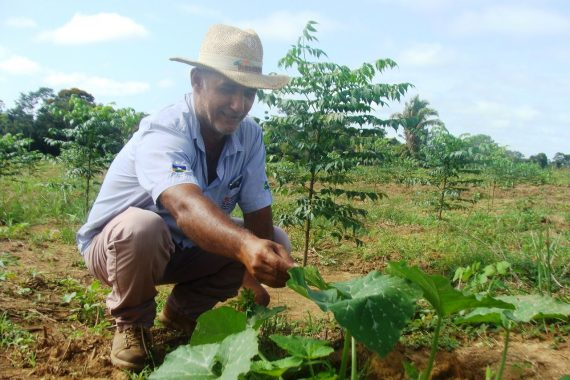 Consultor florestal, Adilson Pepino, já preparou os talhões de florestas para apresentar aos visitantes da Rondônia Rural Show